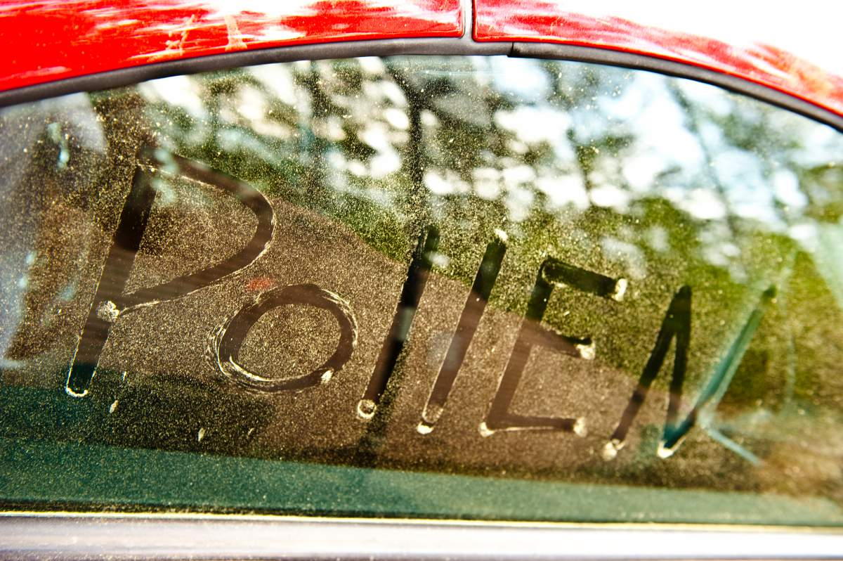 Florida's year round climate is perfect for pollen of all kinds at all times.